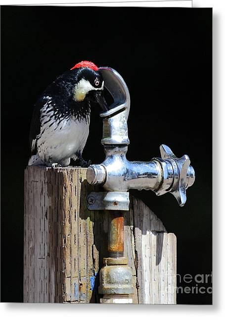 Thirsty Woodpecker . 40d9079 . Vertical Cut Greeting Card by Wingsdomain Art and Photography