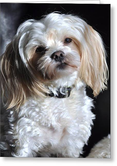 This Guy's My Best Friend Greeting Card by Lisa  DiFruscio