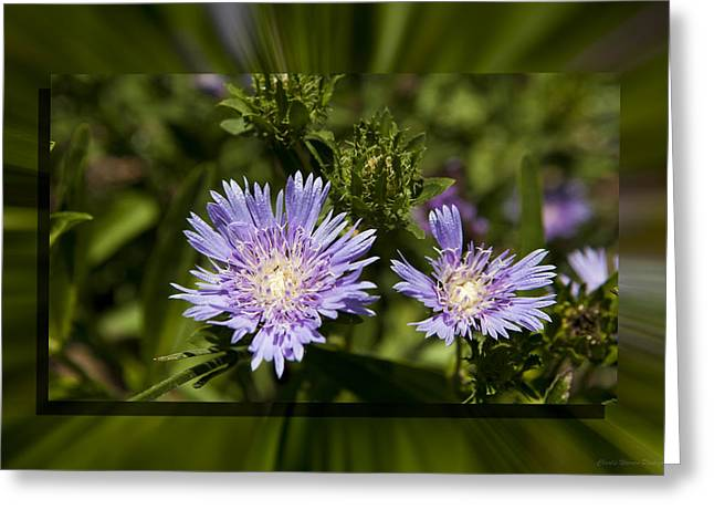 Thistle 131 Greeting Card by Charles Warren