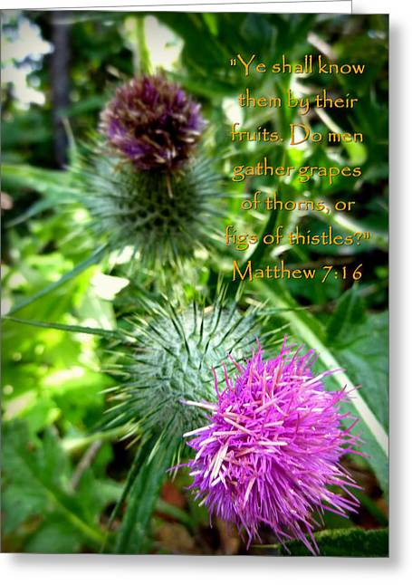 Thistle Matthew 7 Greeting Card by Cindy Wright