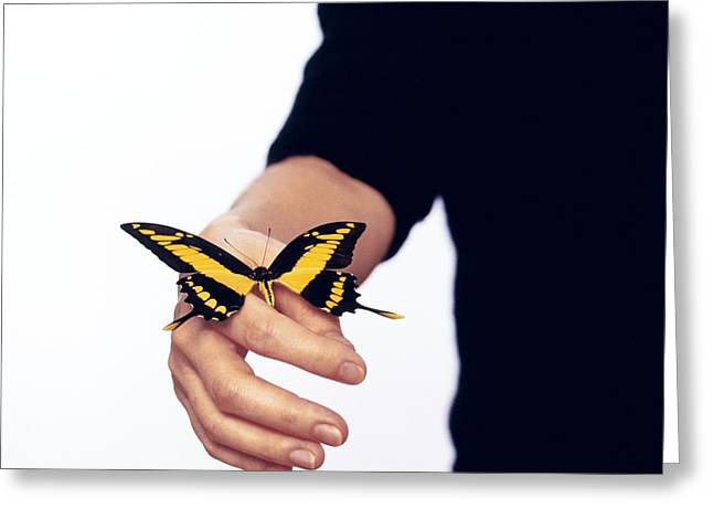Thoas Swallowtail Butterfly Greeting Card by Lawrence Lawry