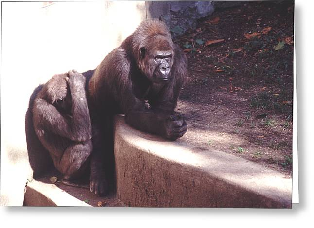 Greeting Card featuring the photograph Thoughtful Gorilla With Child by Tom Wurl