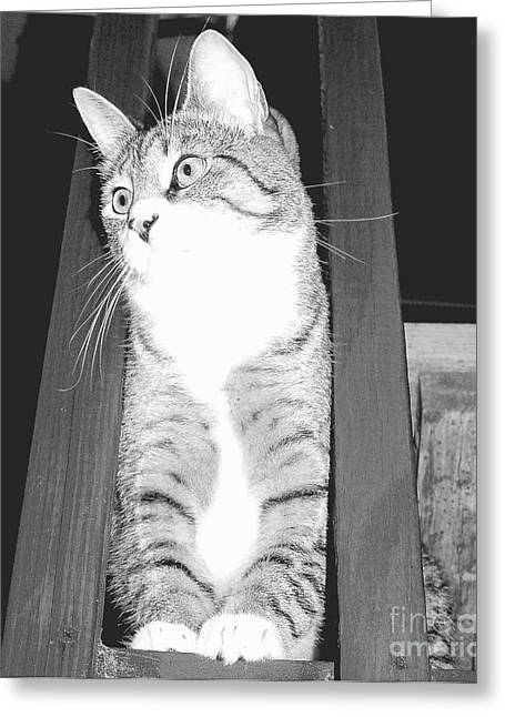 Thoughts Beyond The Porch Greeting Card by Shannons Photos