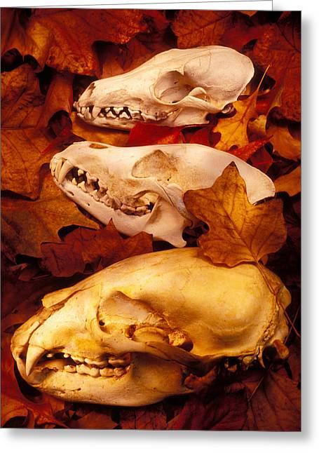 Three Animal Skulls Greeting Card by Garry Gay