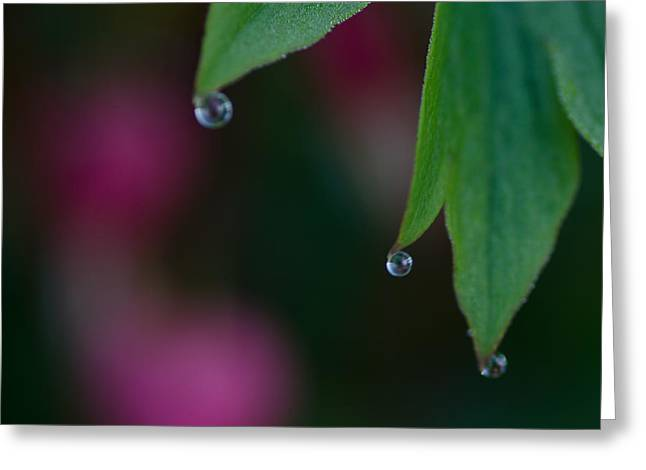 Three Drops Greeting Card by Susan Capuano