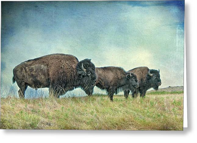 Three In A Row Greeting Card by Tamyra Ayles