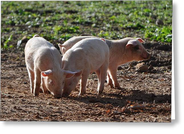 Three Little Pigs Greeting Card by Tammy Price
