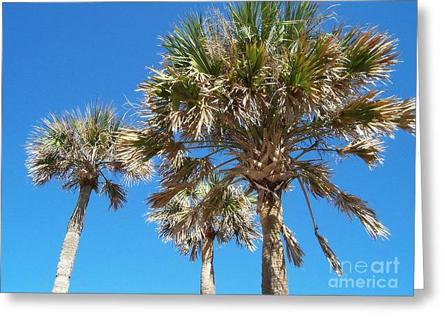Three Palms Greeting Card by Jeanne Forsythe