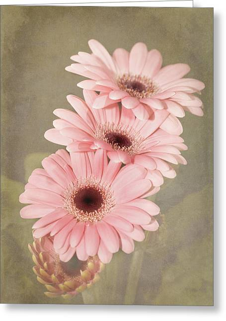 Three Pink Gerberas Greeting Card by Fiona Messenger