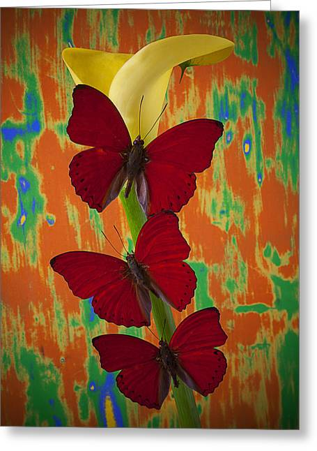 Three Red Butterflies On Yellow Calla Lily Greeting Card by Garry Gay