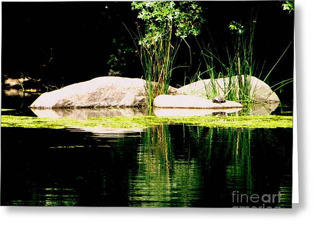 Three Rocks And A Turtle Greeting Card by Maria Scarfone