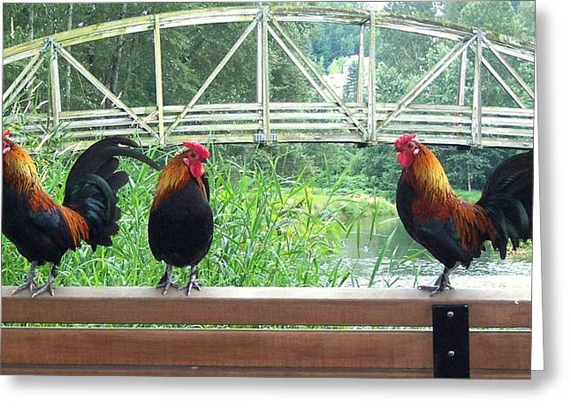 Three Roosters  Greeting Card