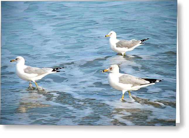 Three Seagulls Greeting Card by Kathy Gibbons