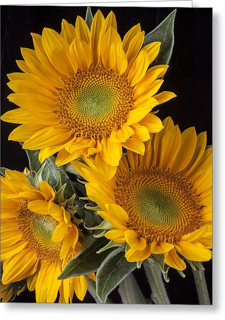 Three Sunflowers Greeting Card by Garry Gay