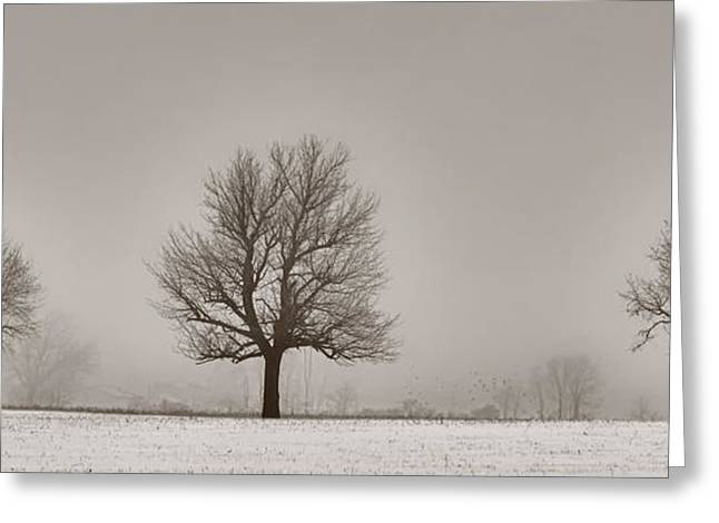 Three Trees Greeting Card by Brian Mollenkopf