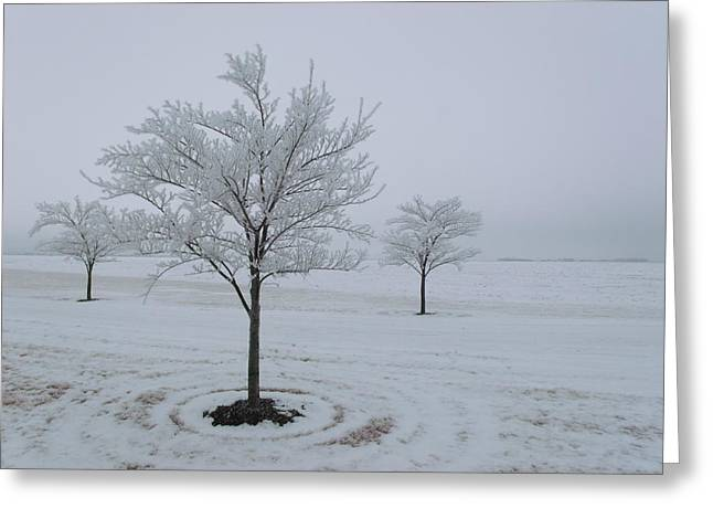 Three Trees Flocked Greeting Card by Brian  Maloney