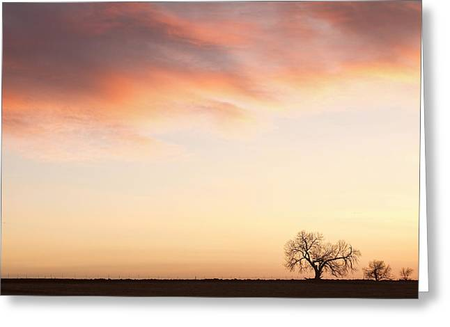 Three Trees Sunrise Sky Landscape Greeting Card by James BO  Insogna