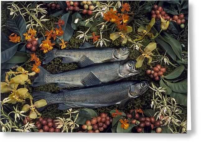 Three Trout Surrounded By Coffee Greeting Card