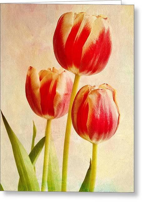 Three Tulips Greeting Card by James Bethanis