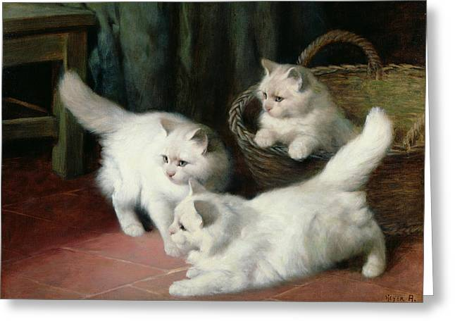 Three White Angora Kittens Greeting Card by Arthur Heyer