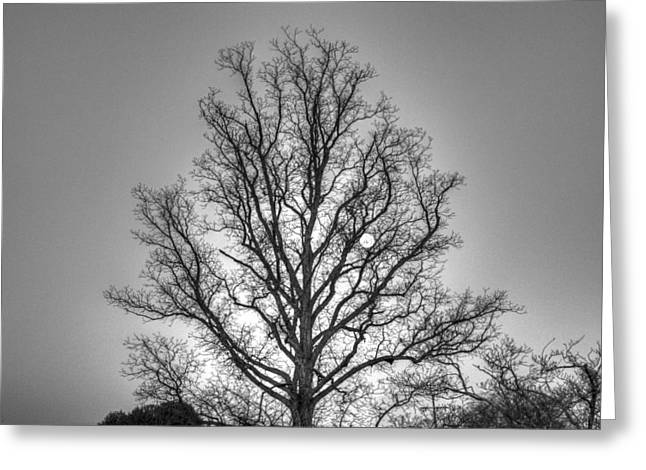 Through The Boughs Bw Greeting Card by Dan Stone