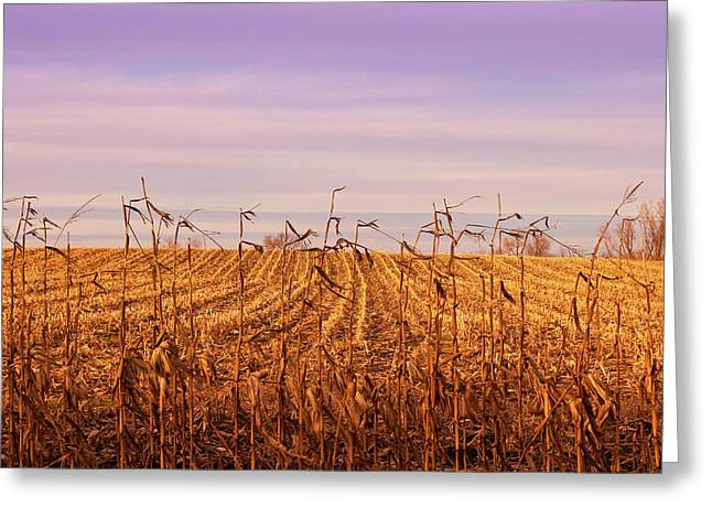 Greeting Card featuring the photograph Through The Cornfield by Rachel Cohen