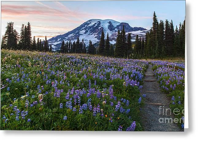 Through The Flowers Greeting Card by Mike Reid