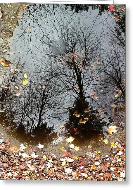 Through The Looking Glass Greeting Card by Elijah Brook