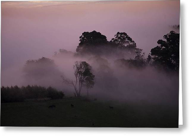 Through The Mist Greeting Card by Lee Stickels