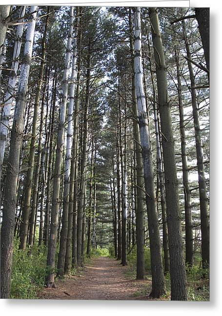 Through The Woods Greeting Card by Jeannette Hunt