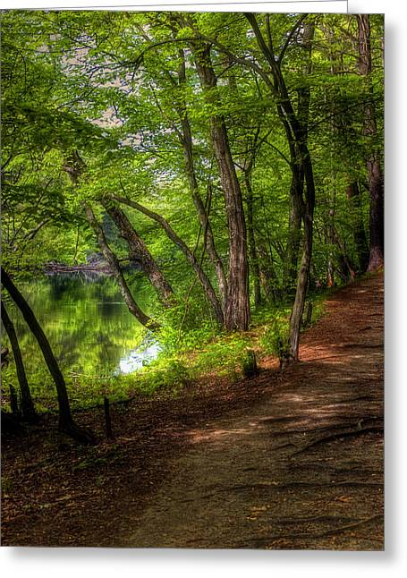 Through The Woods Greeting Card by Joann Vitali