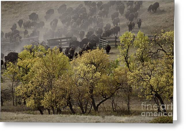 Thunder In The Black Hills Greeting Card