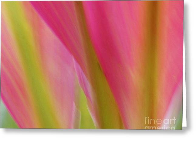 Greeting Card featuring the photograph Ti Leaves by Ranjini Kandasamy