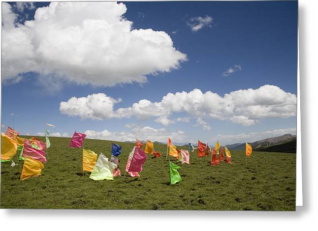 Tibetan Prayer Flags In A Field Greeting Card by David Evans
