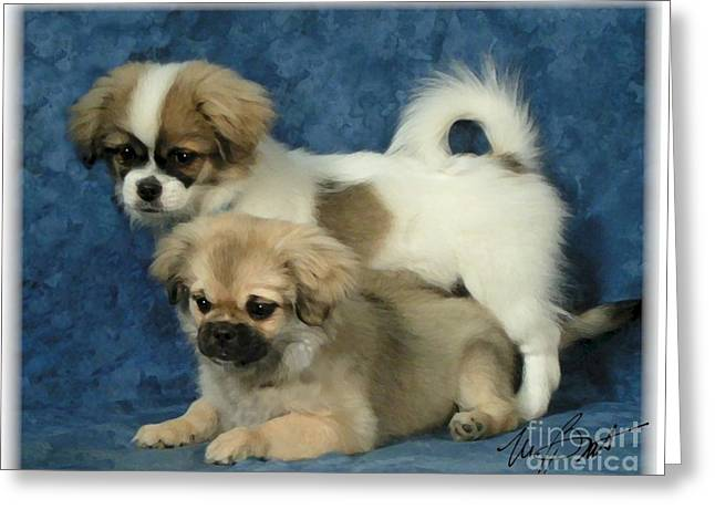 Tibetan Spaniel Pups 2  Greeting Card by Maxine Bochnia