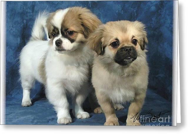 Tibetan Spaniel Pups Greeting Card by Maxine Bochnia