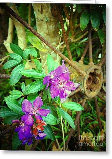 Tibouchina Greeting Card by Therese Alcorn