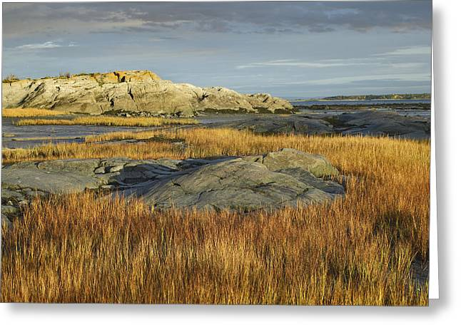 Tidal Marsh Riviere Trois Pistoles Greeting Card by Tim Fitzharris