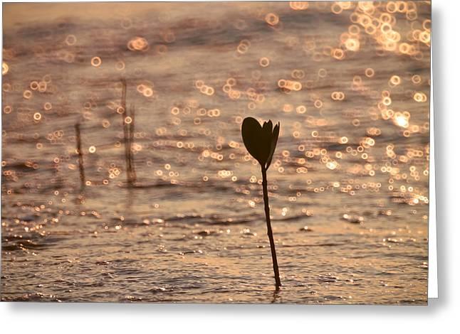 Tide Greeting Card by Kam Chuen Dung