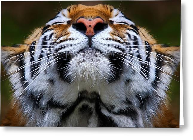 Tiger 1  Greeting Card