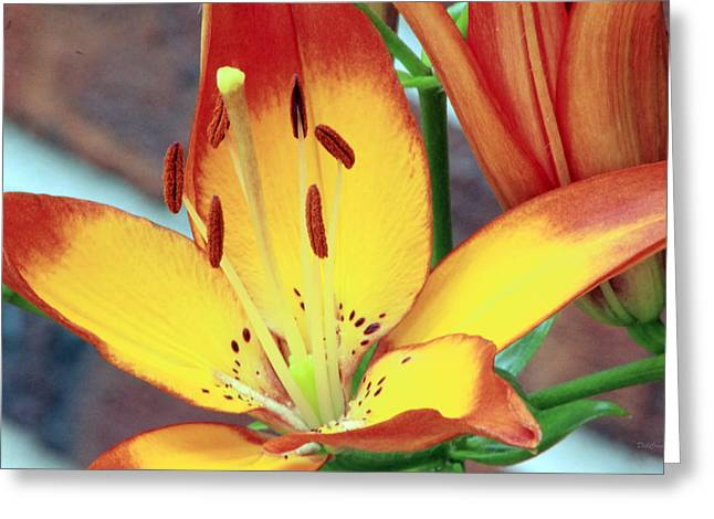 Tiger Daylily Subdued Greeting Card by Deborah  Crew-Johnson
