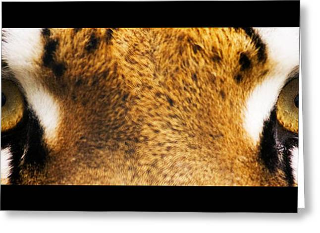 Tiger Eyes Greeting Card by Sumit Mehndiratta