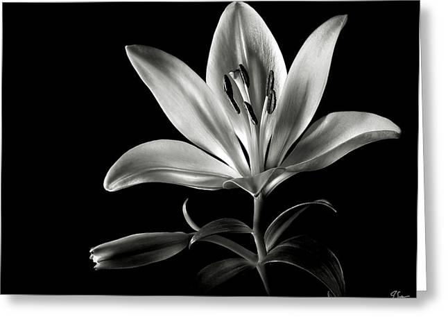 Tiger Lily In Black And White Greeting Card by Endre Balogh
