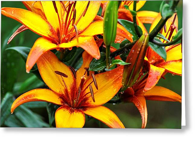 Tiger Lily Greeting Card by Terri Albertson