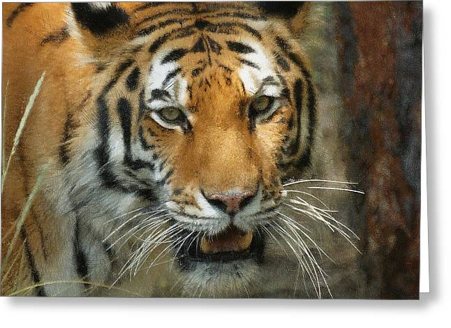 Tiger Painterly Square Format  Greeting Card