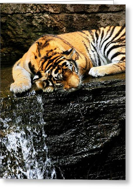 Tiger Paw Greeting Card by Angela Rath