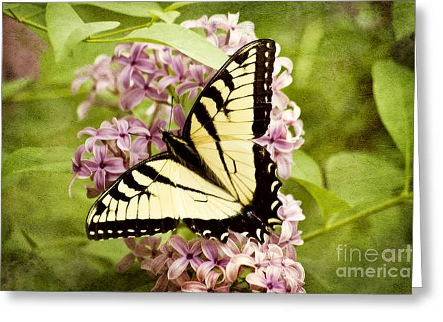 Tiger Swallowtail Butterfly Greeting Card by Cheryl Davis