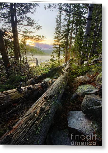 Timber Greeting Card by Tyler Porter