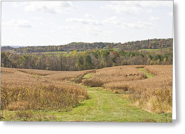 Time To Harvest Greeting Card by Wayne Stabnaw