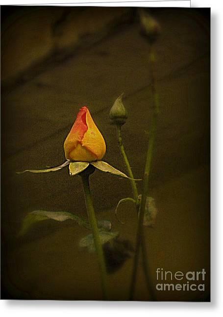 Timeless Rose Greeting Card by Carol  Hynes